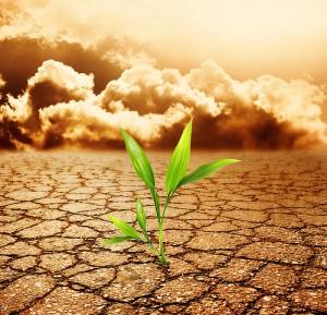 sol pollutions